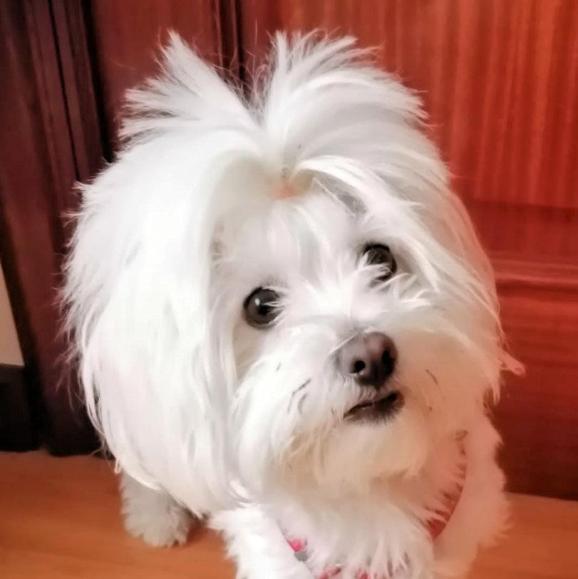 Grabado chapa de perro